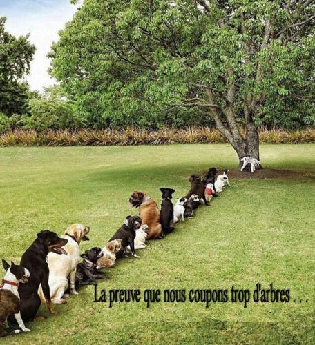 chiens.jpg