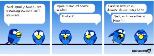 birds & CSG.jpg