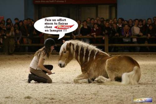 cheval findius.jpg
