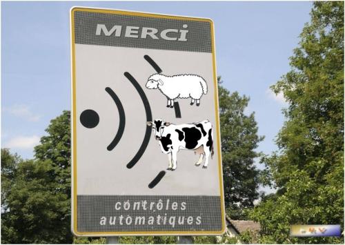 vache àà lait.jpg